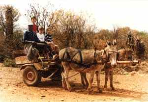 A donkey cart - the ultimate way of travel!